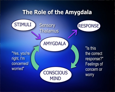 DRole of Amygdala